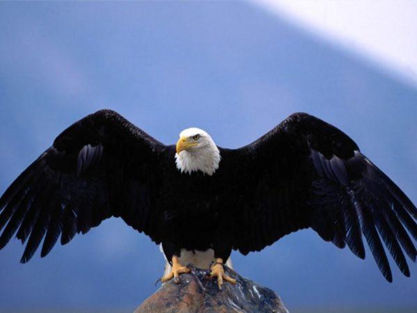 Symbolisme de l'aigle