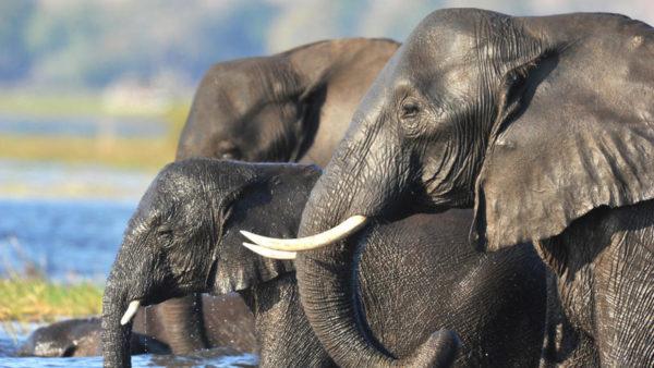 Symbolisme de l'éléphant